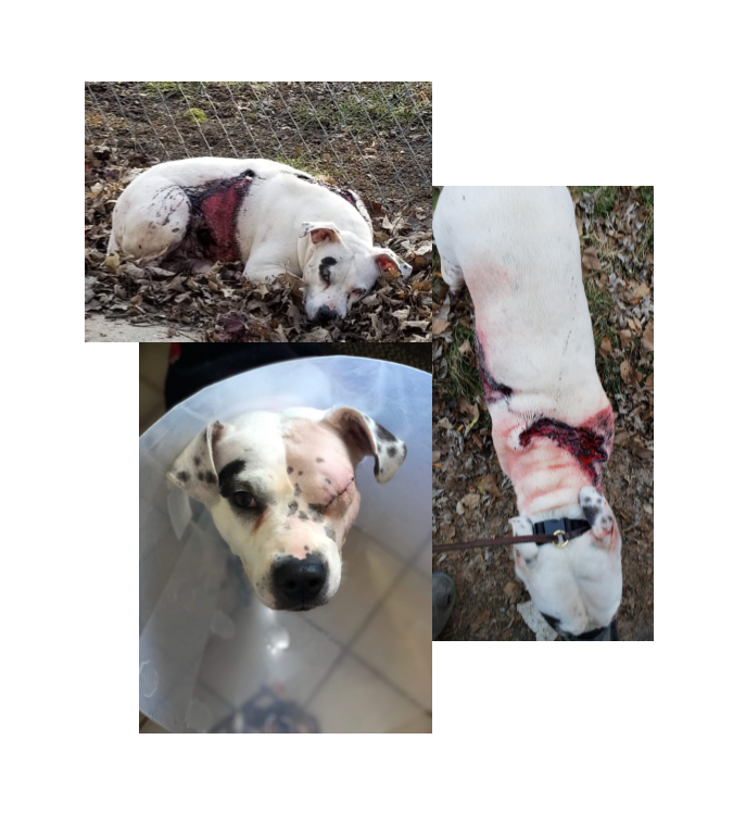 March 2019 - Elise Streetheart Rescue